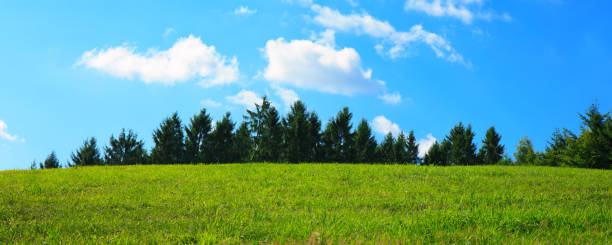 Field with green grass and sky Summer field with blue sky and white big clouds. fluchtpunktperspektive stock pictures, royalty-free photos & images