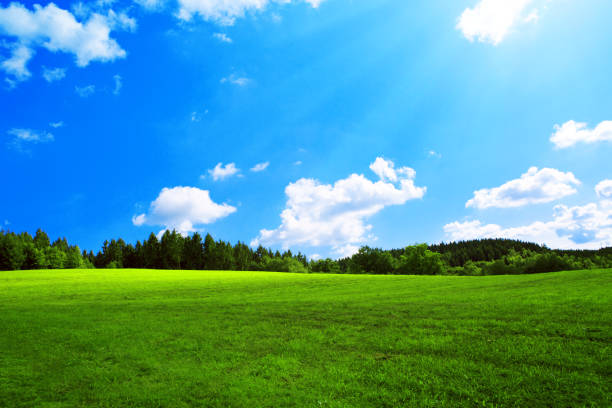 Field with green grass and sun Summer field with blue sky and white big clouds. fluchtpunktperspektive stock pictures, royalty-free photos & images
