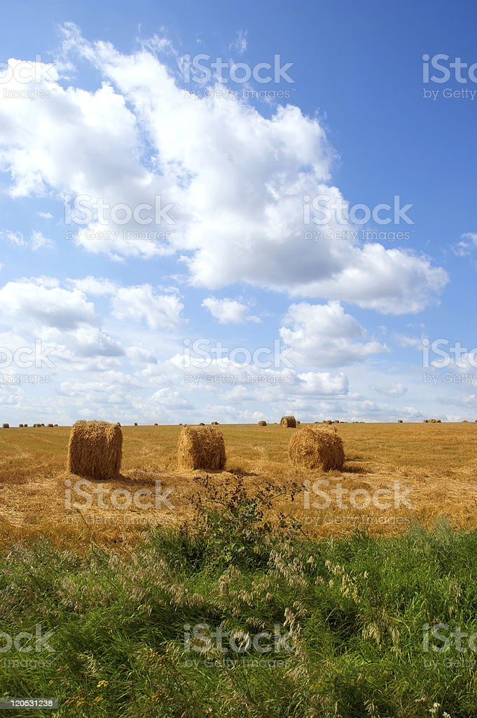Field with hay  bales royalty-free stock photo