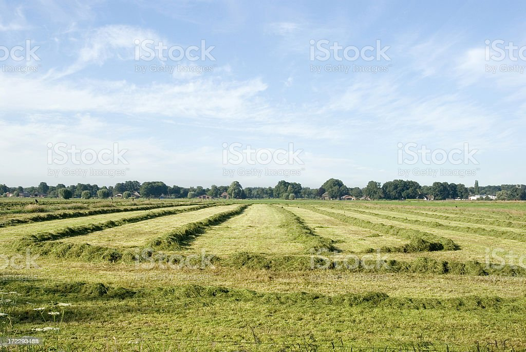 Field with Hay & nice blue Sky 2 royalty-free stock photo