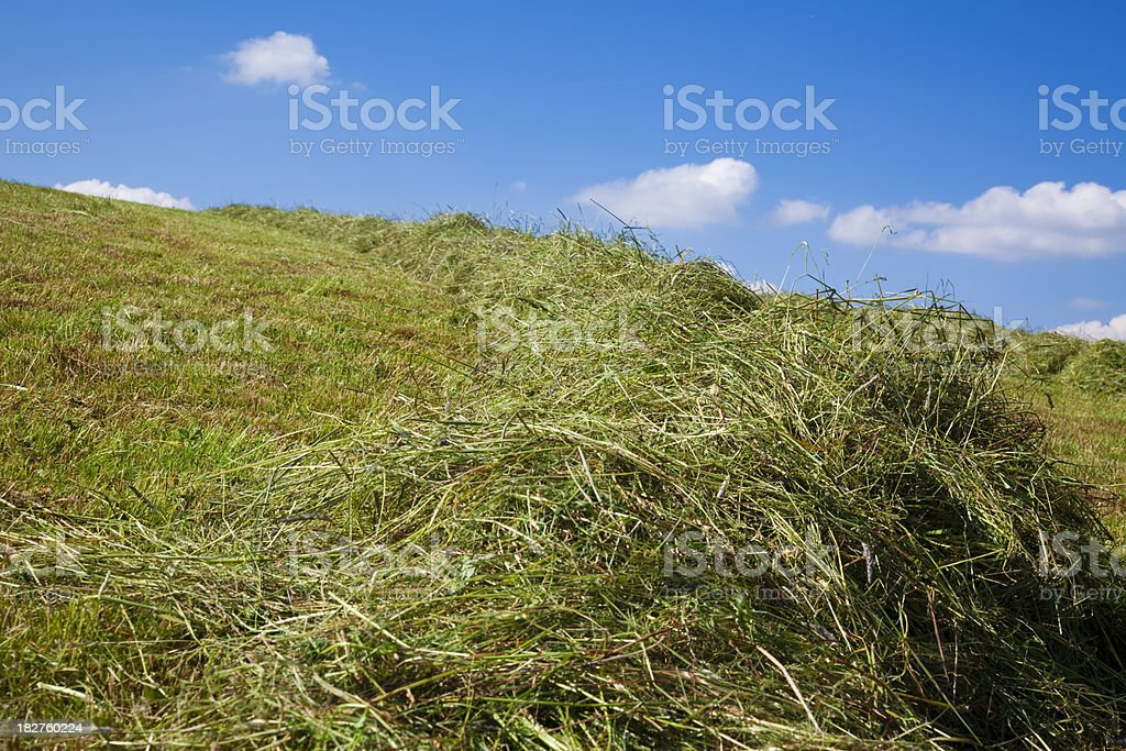Feld mit Heu royalty-free stock photo