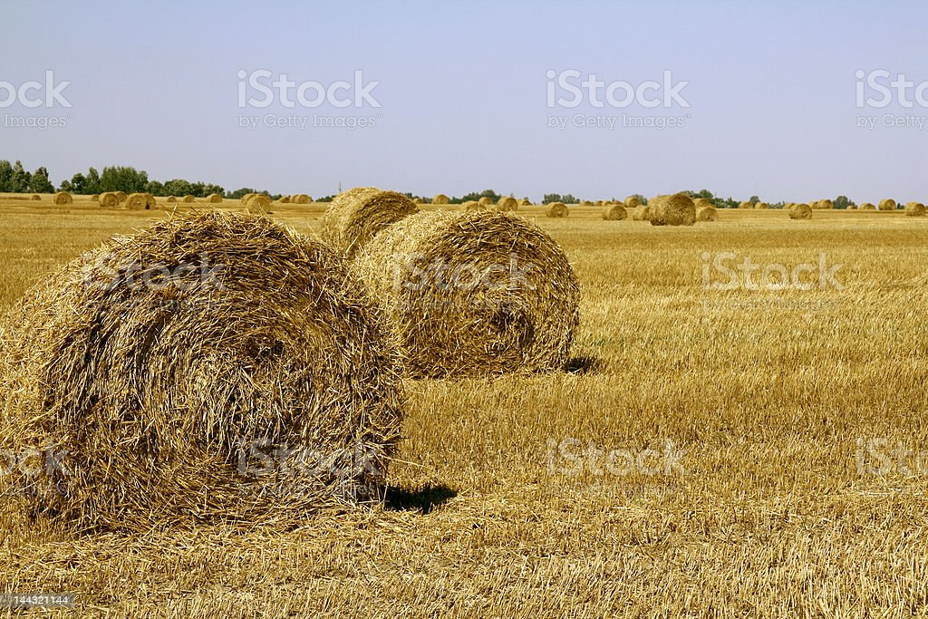 Field with haycocks royalty-free stock photo