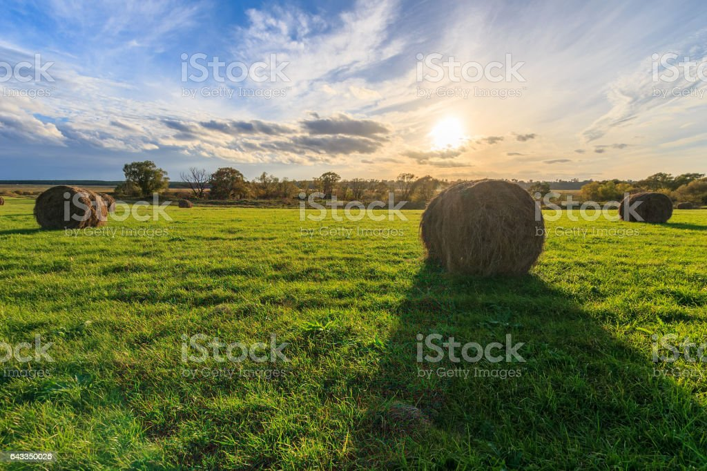 field with haystacks at sunset in early autumn stock photo