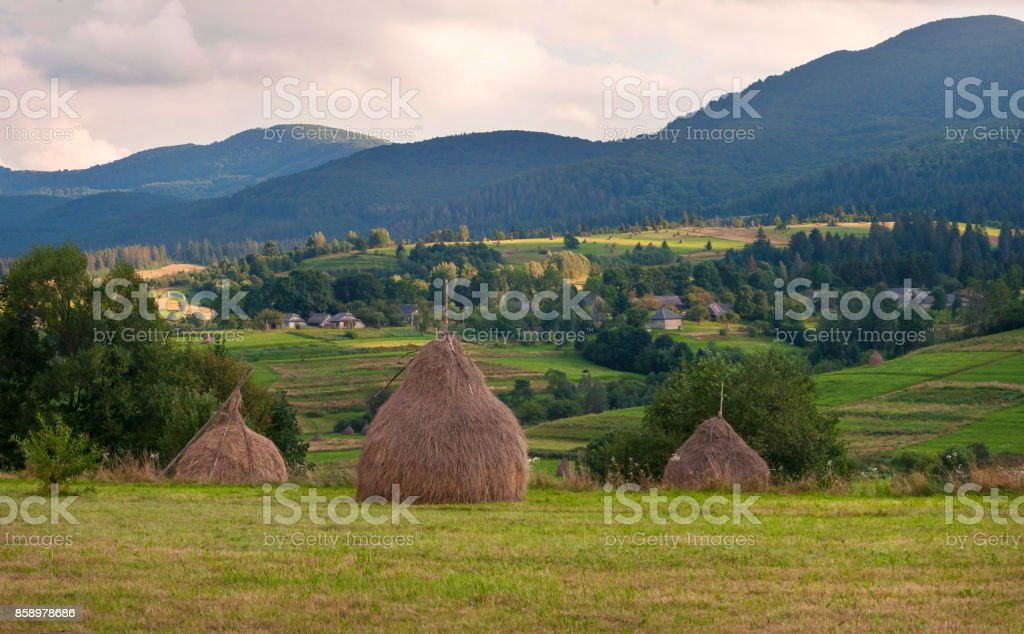 Field with haystacks in the sunny day. Rural landscape; hey rolls on the field at the mountains in Ukraine stock photo