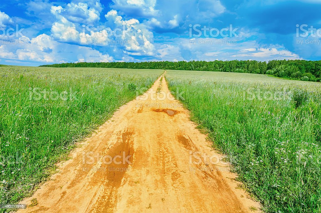 Field with rye and road. stock photo
