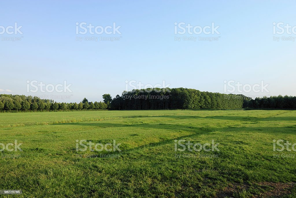 Field with trees royalty-free stock photo