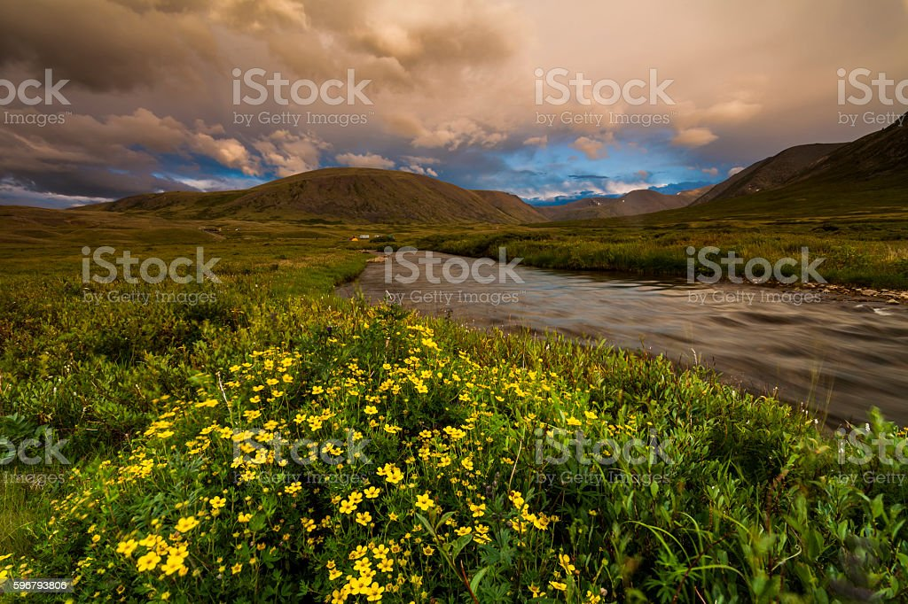 Field with wild flowers, river and mountains on the background. – Foto