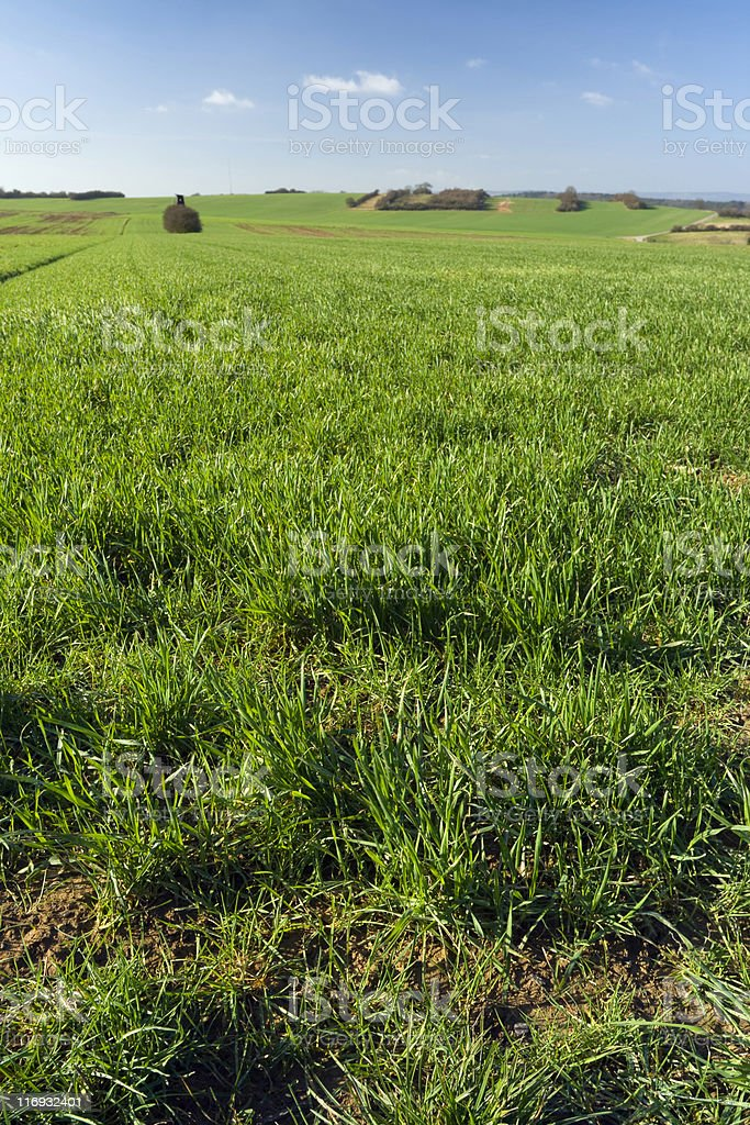 fields and meadow royalty-free stock photo