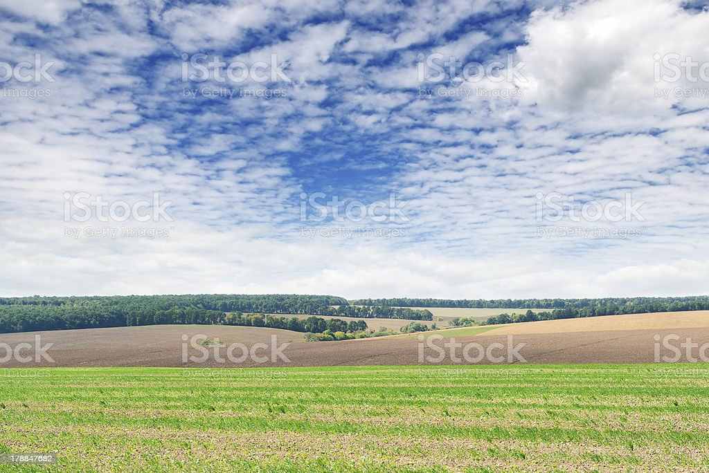 fields and  sky royalty-free stock photo