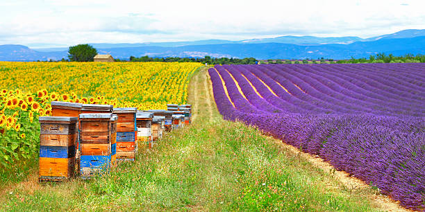 Fields in Provence, France stock photo