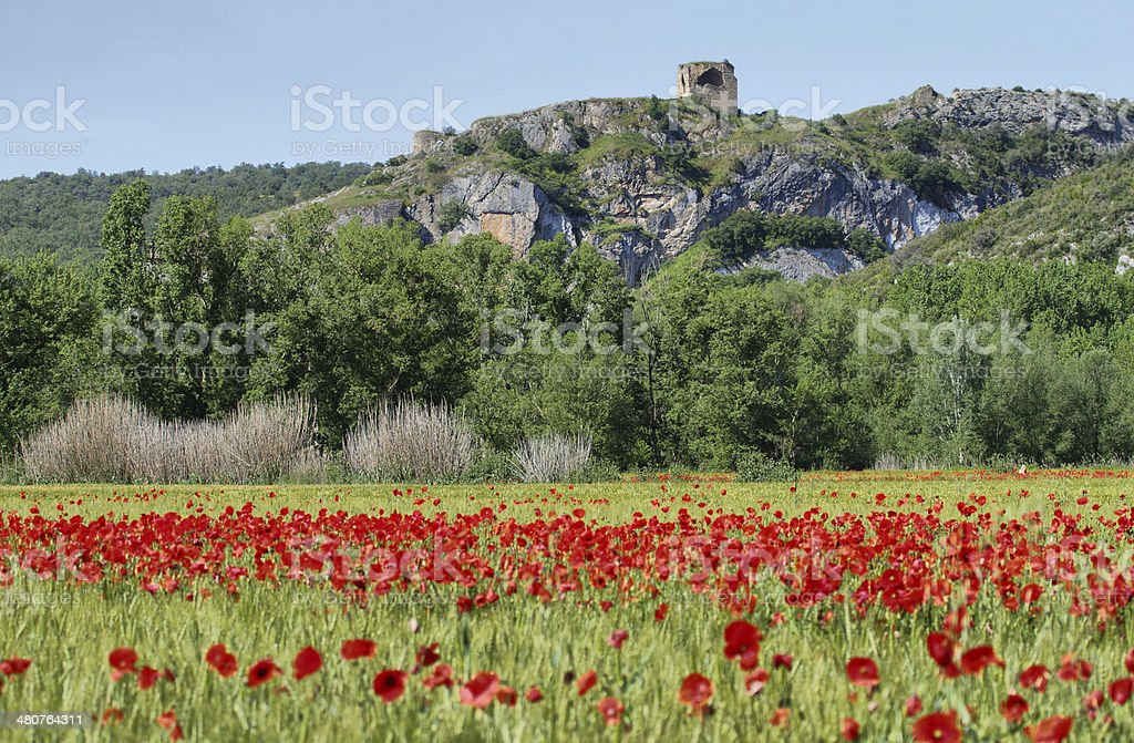 Fields of cereals and poppies near Alos de Balaguer stock photo