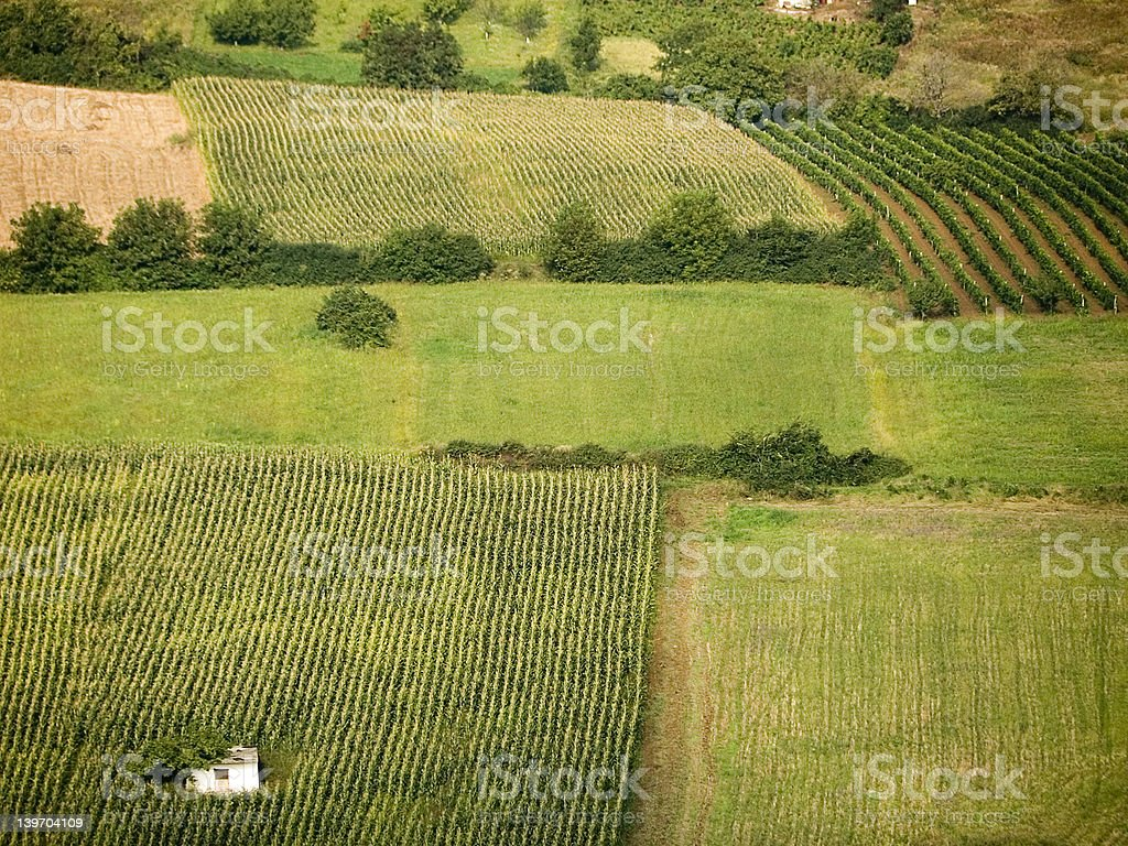 Fields of cereals and vineyards stock photo