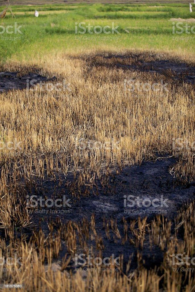 Fields of fire. stock photo