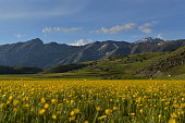 Fields of Gold - Gran Sasso d'Italia
