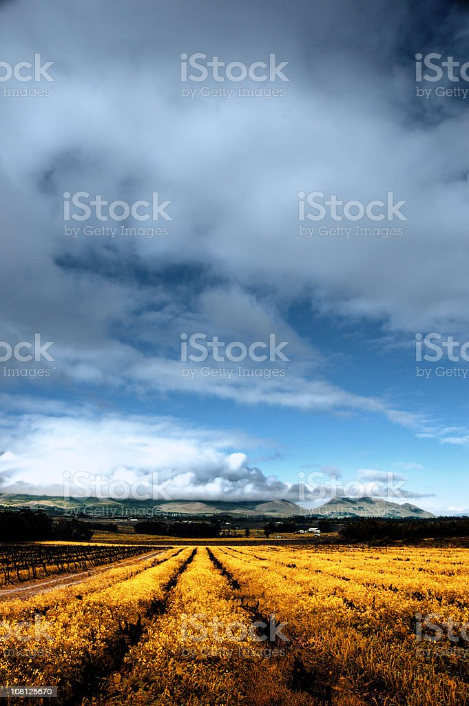 Fields of Gold royalty-free stock photo