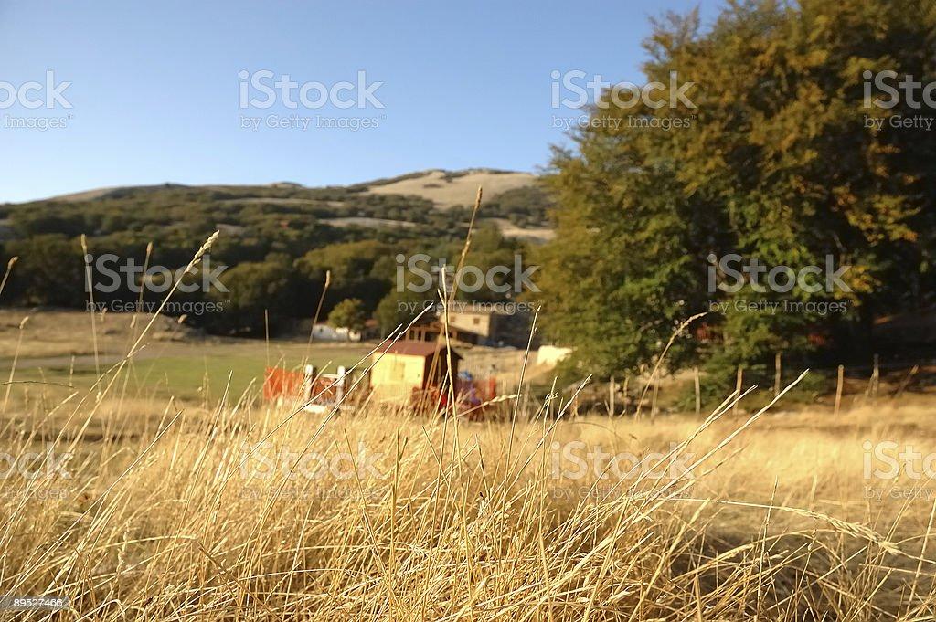 Fields of Gold 免版稅 stock photo