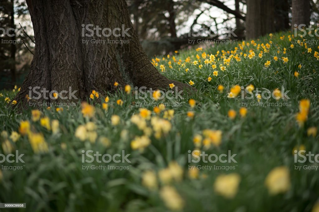 Fields of Gold stock photo