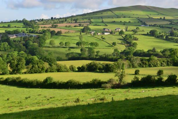Felder von Irland – Foto
