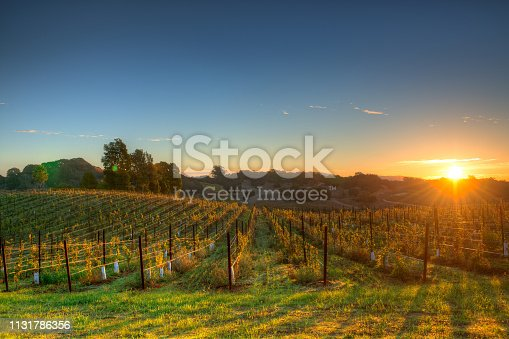 Napa Valley California at Sunrise