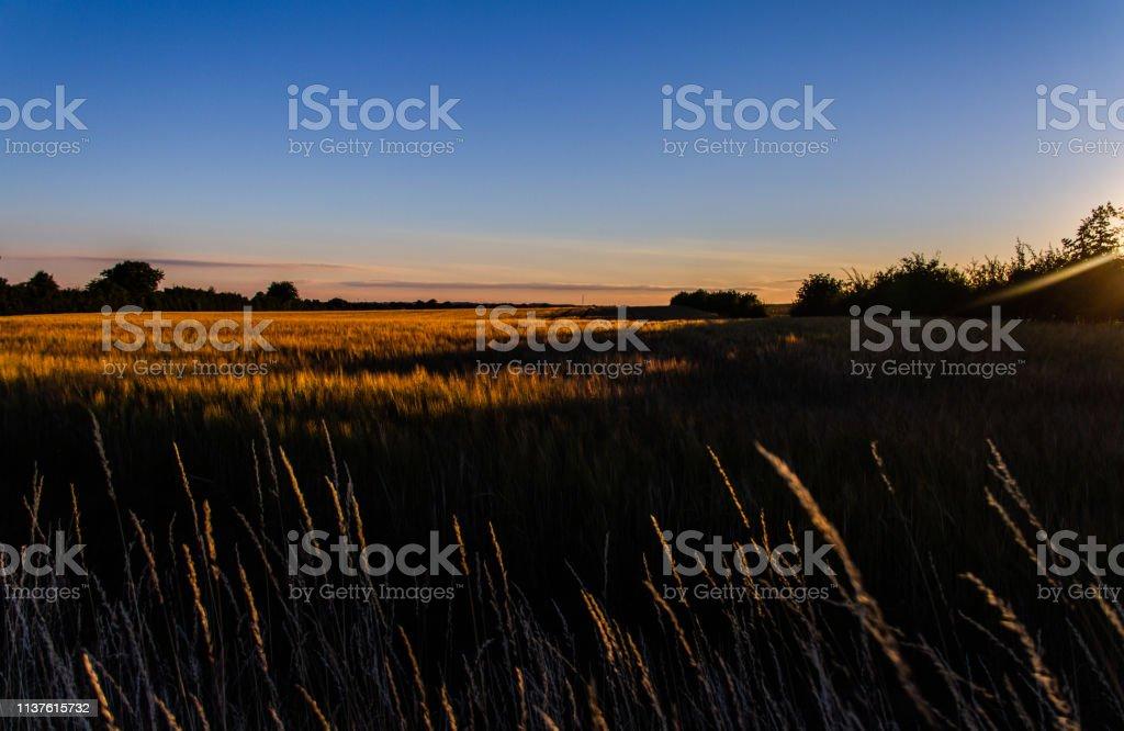 Fields of olde stock photo