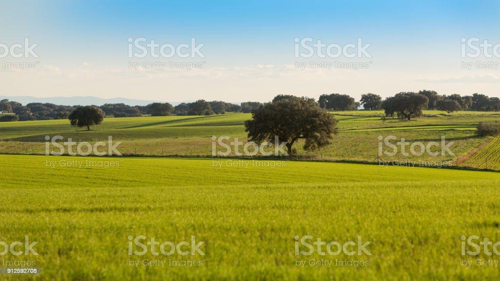 Campos de la Dehesa de Extremadura con sus tierras de cultivo - foto de stock