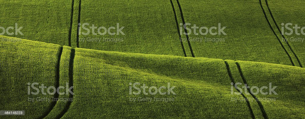 Fields of Tuscany royalty-free stock photo