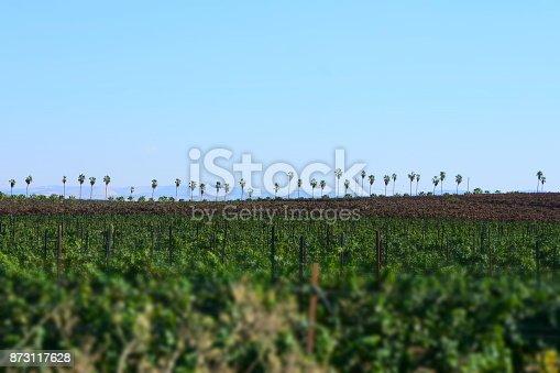619246768 istock photo Fields of vine 873117628