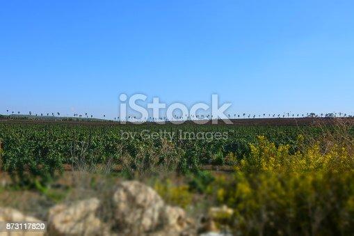 619246768 istock photo Fields of vine 873117820