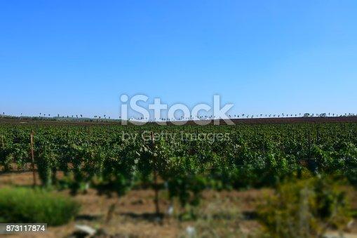 619246768 istock photo Fields of vine 873117874