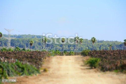 619246768 istock photo Fields of vine 873117936