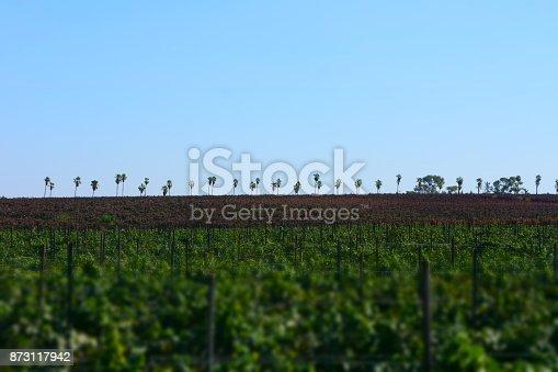 619246768 istock photo Fields of vine 873117942