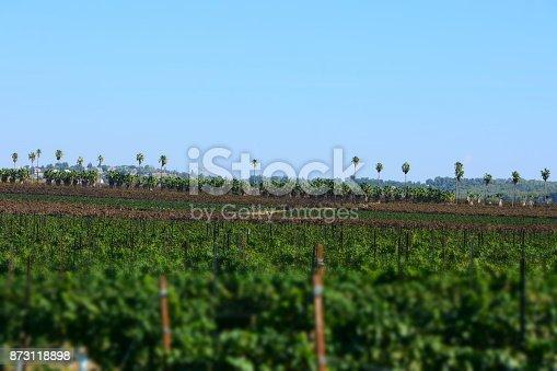 619246768 istock photo Fields of vine 873118898