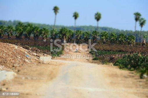 619246768 istock photo Fields of vine 873118900