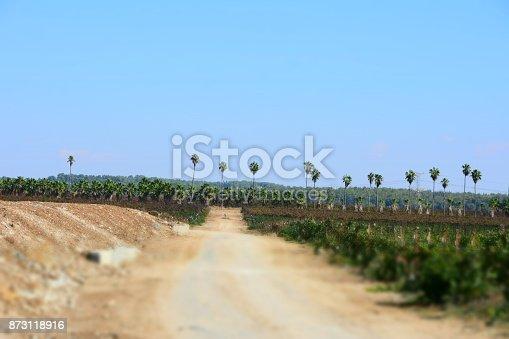 619246768 istock photo Fields of vine 873118916