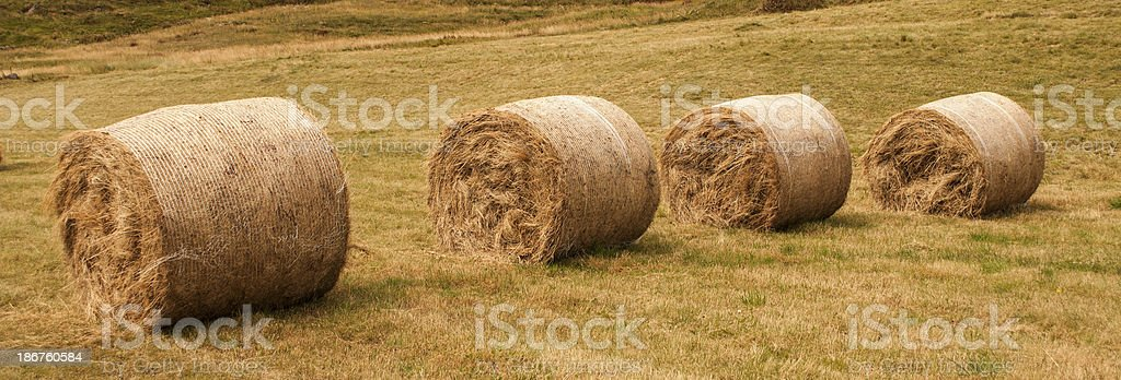 Fields royalty-free stock photo