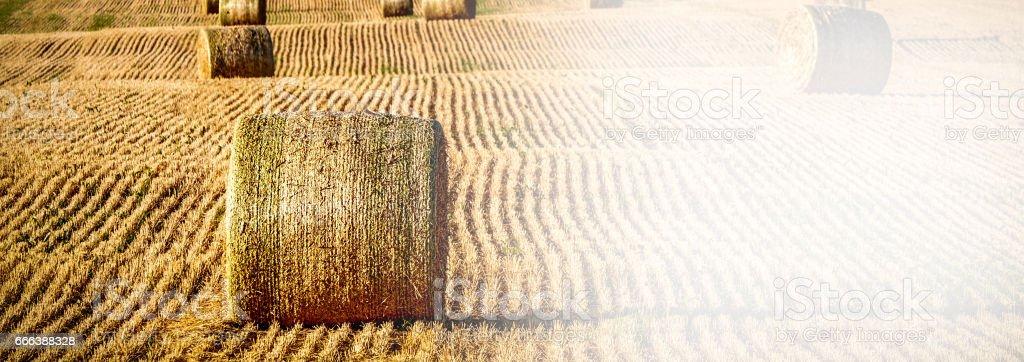 Fields (Banner 2) stock photo
