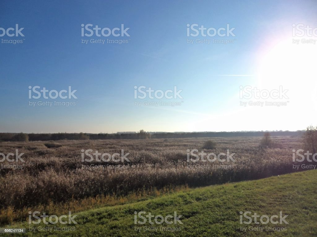 Fields & sun, nature view stock photo