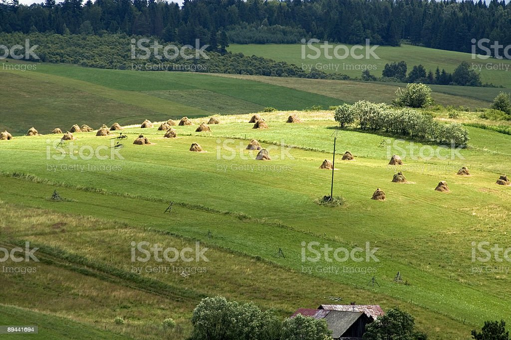 Fields with sheafs royalty-free stock photo