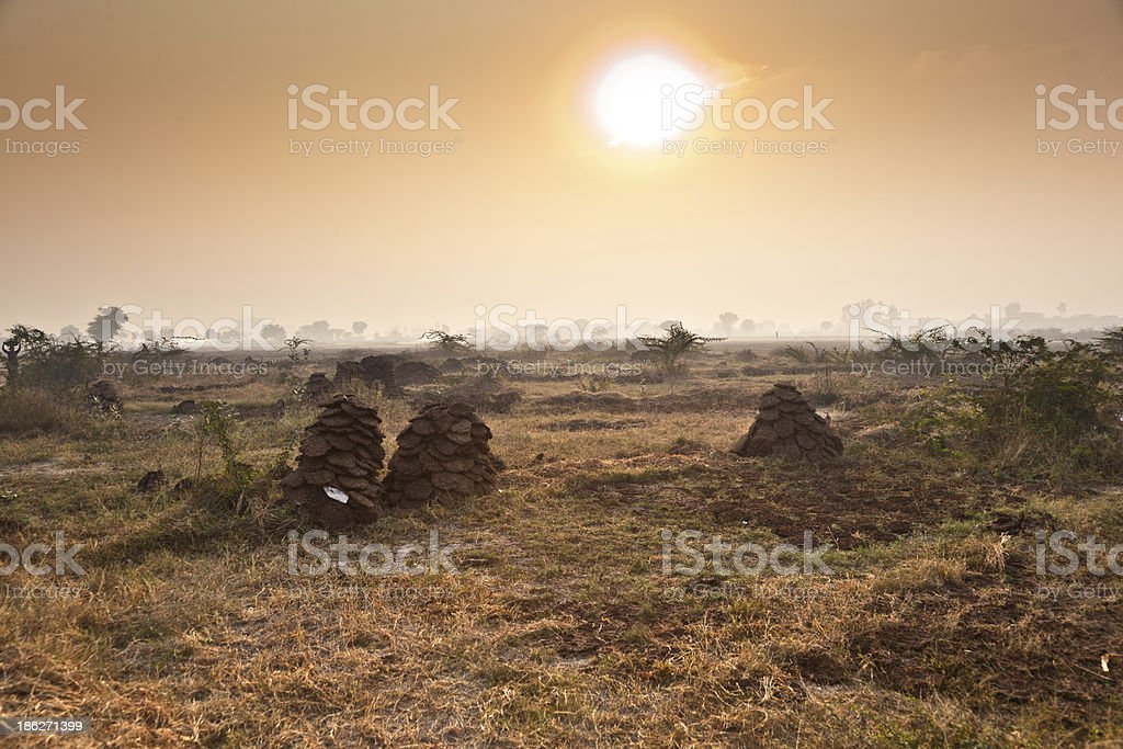 fields with trees and piles of cow pats stock photo