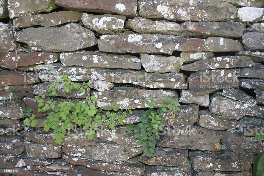 Fieldstone wall royalty-free stock photo