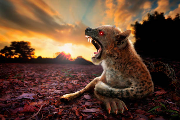 Fierce Chupacabra creature, a digital arts creative edit image- Artistic digital illustration oil painting style. A composite from my own images of dog, sunset landscape and illustration graphic painting. Top selling image. fang stock pictures, royalty-free photos & images