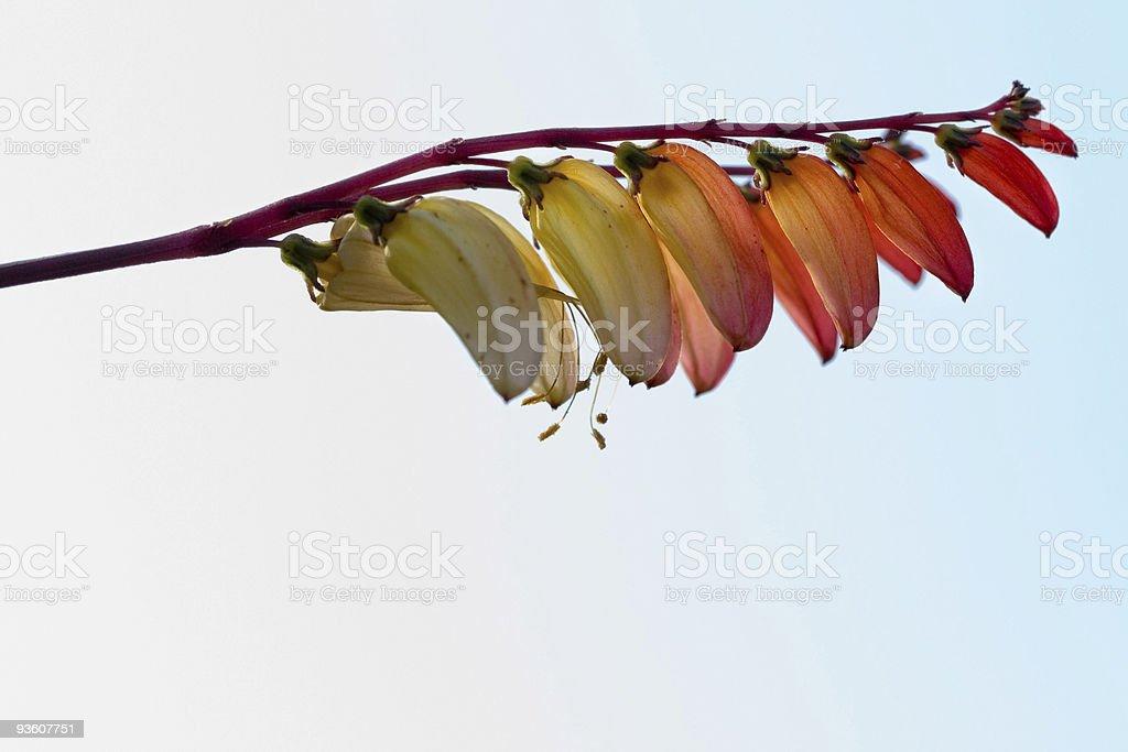Fiery autumn blossoms stock photo