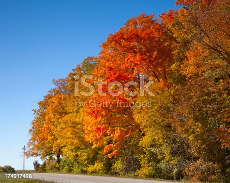 Fiery Autumn Trees Ablaze With Color