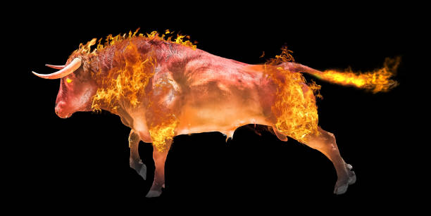 Fiery bull on a black background. stock photo