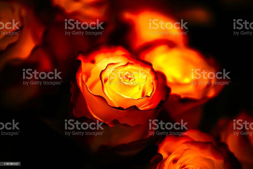 Fiery roses royalty-free stock photo