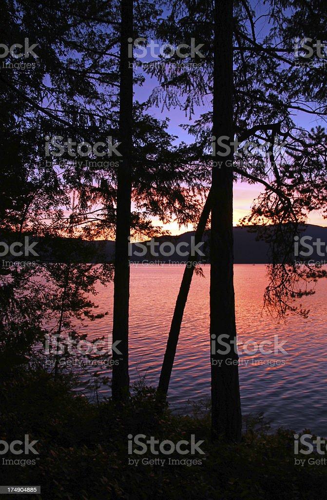 Fiery Tree stock photo