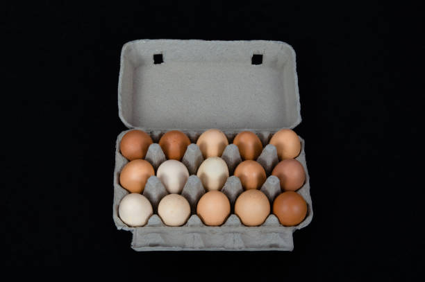Fifteen chicken eggs in a carton box, isolated on black mat background stock photo