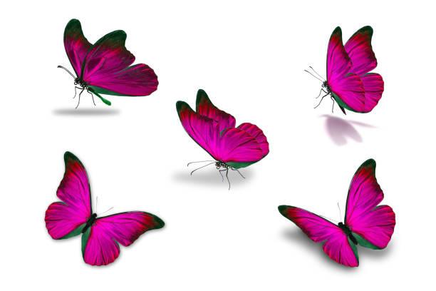 Fifth pink butterfly picture id907471904?b=1&k=6&m=907471904&s=612x612&w=0&h=5i rfseohmyfzsx18jdafqnk4jxkhrpanoo bvqbsaw=