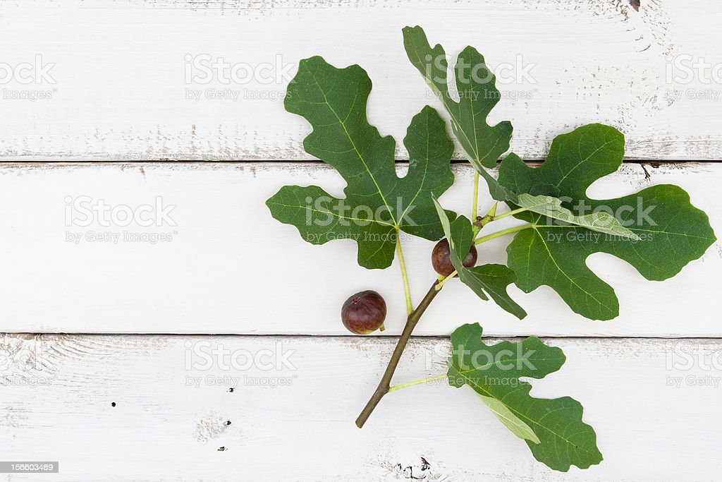 Fig tree branch with ripe fresh fruits royalty-free stock photo