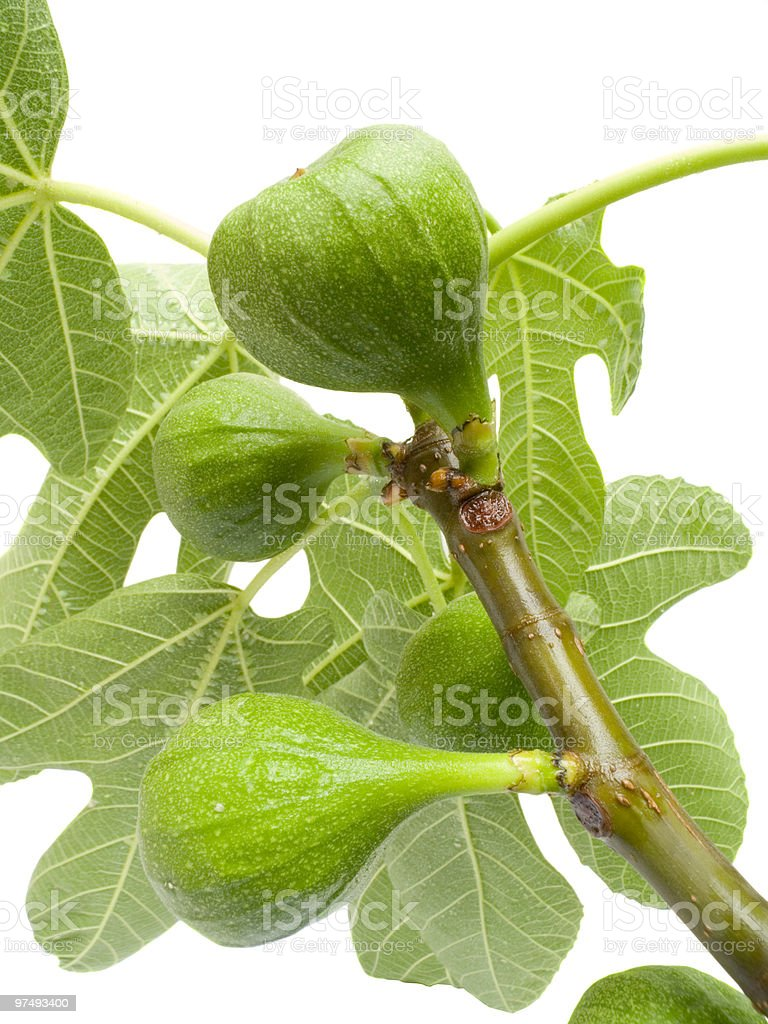 fig with leaves royalty-free stock photo